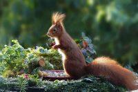 garden, fall, nature, squirrel