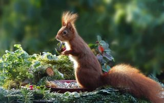 garden, fall, nature, squirrel