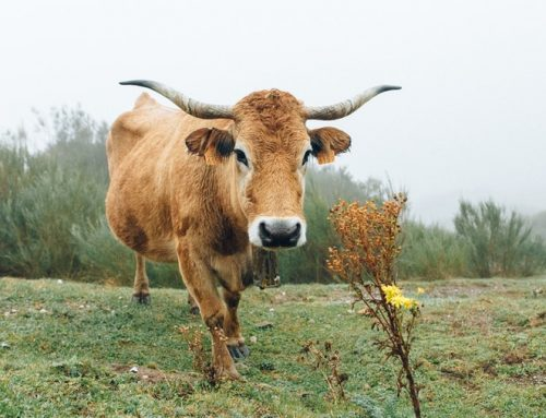Drought-stricken farmers, ranchers have time to replace livestock
